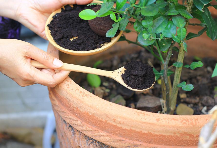 marc café jardin